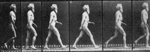 muybridge-walking